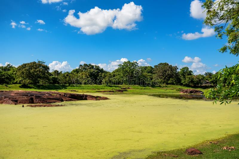 Scenic landscape of tropical wetland royalty free stock photography