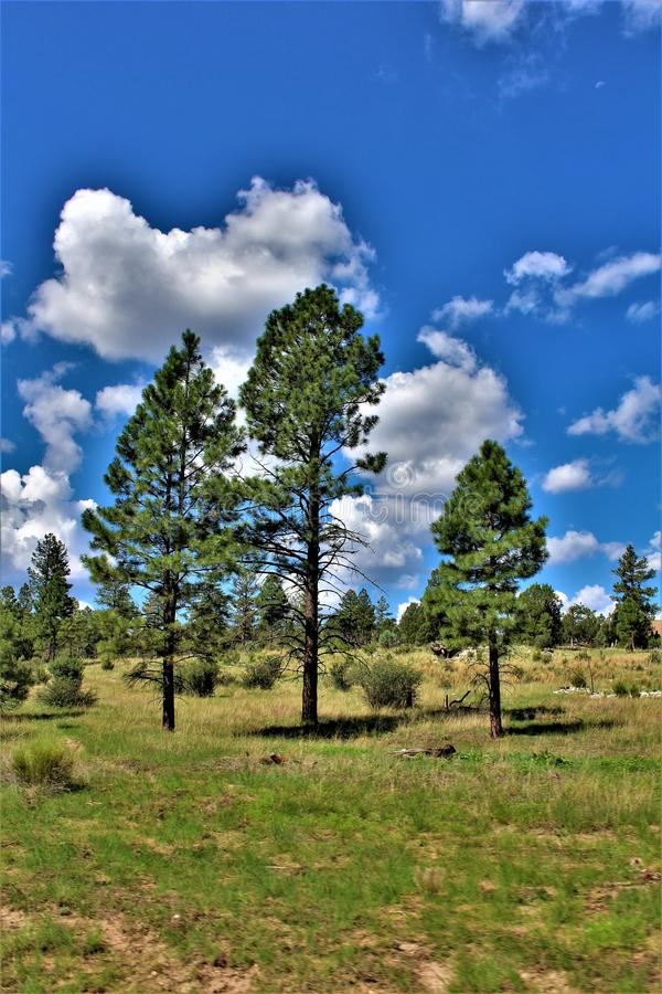 Apache Sitgreaves National Forests, Arizona, United States. Scenic landscape view of the Apache Sitgreaves National Forests located in east central, Heber stock images