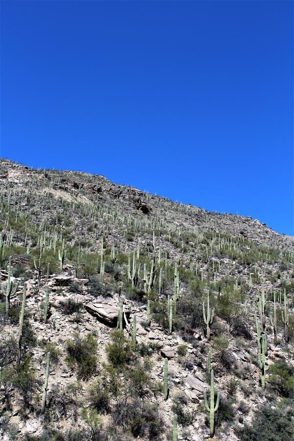 Mount Lemmon, Tucson, Arizona, United States. Scenic landscape view with vegetation of Mount Lemmon located in Tucson, Arizona in the United States stock images
