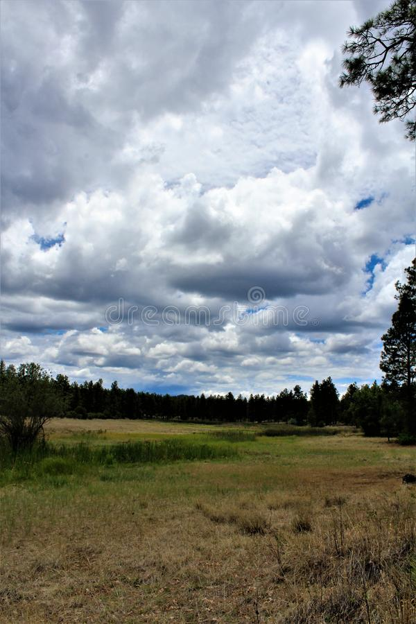 White Mountain Nature Center, Pinetop Lakeside, Arizona, United States. Scenic landscape view at the White Mountain Nature Center, located in Pinetop Lakeside stock images