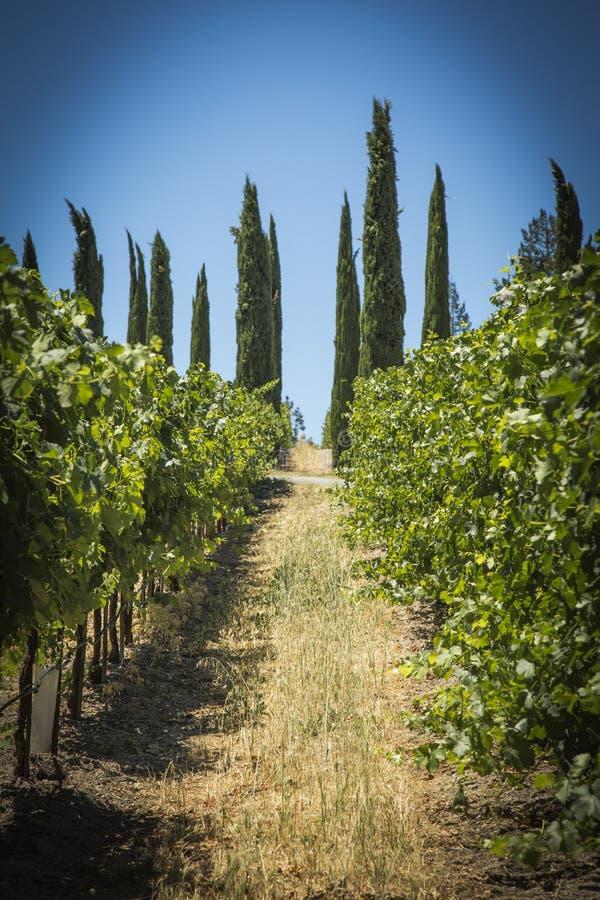 Napa Valley Grape Farm royalty free stock photography