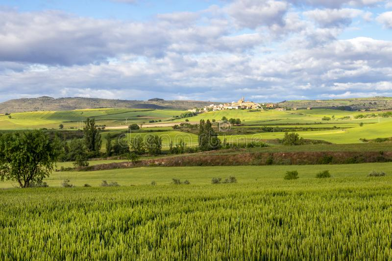 Scenic May agricultural landscape with wheat fields on the Camino de Santiago, Way of St. James in Navarre, Spain royalty free stock photo