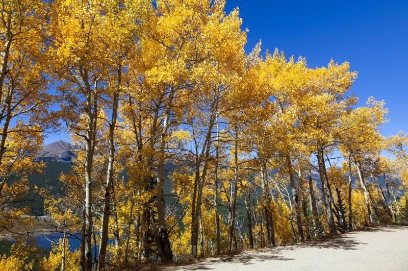 Scenic Mountain View Through Aspens with Lake royalty free stock photos