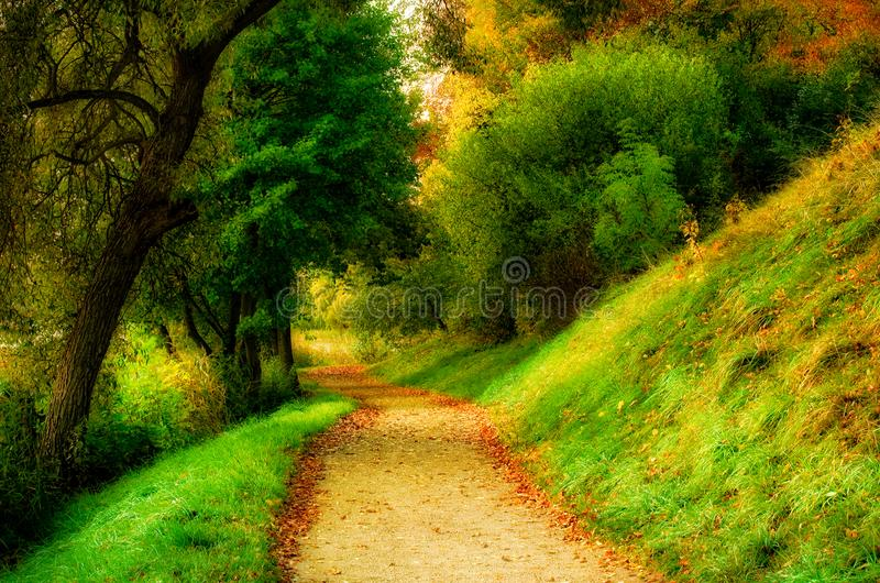 Scenic nature landscape of countryside path through forest royalty free stock photography