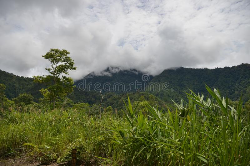 Scenic of Nature at Phu Soi Dao National Park royalty free stock images