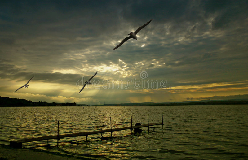 Download Scenic ocean sunset stock image. Image of seabirds, seagulls - 161807