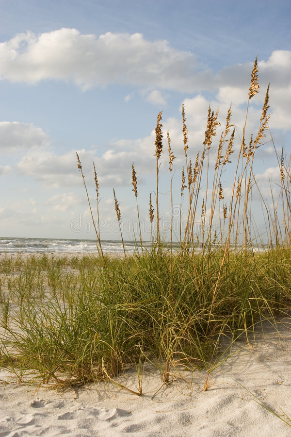 Scenic Ocean View stock image