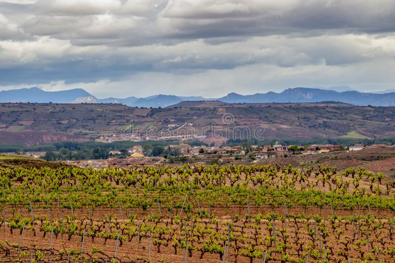 Scenic overcast landscape with vineyards in La Rioja, Spain, route Ventosa-Najera royalty free stock photos