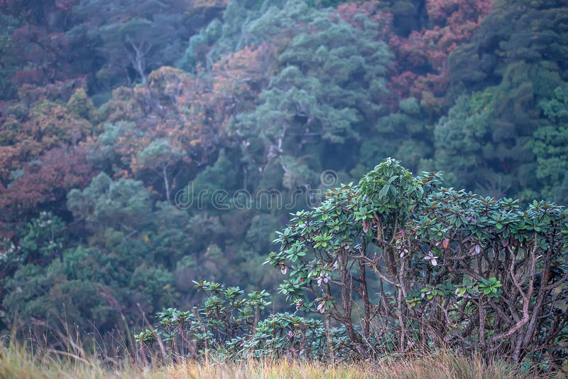 Download Scenic Path Through Cloudforest In Horton Plains Stock Photo - Image: 83718678