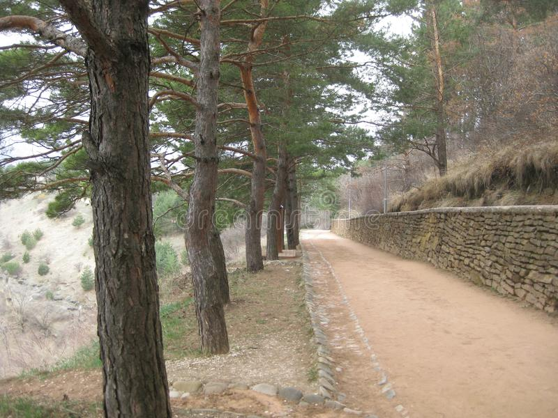 Scenic path in the Park of Kislovodsk. On the left side of the track grow tall slender pine trees, and on the right wall made of s. Tone. Behind this wall is a stock images