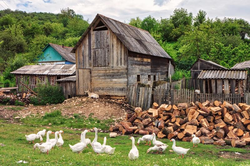 Scenic rustic summer landscape of a peasant village with geese grazing outdoors and firewood piled by the shed. Quiet authentic. Life at Russian Caucasus stock image