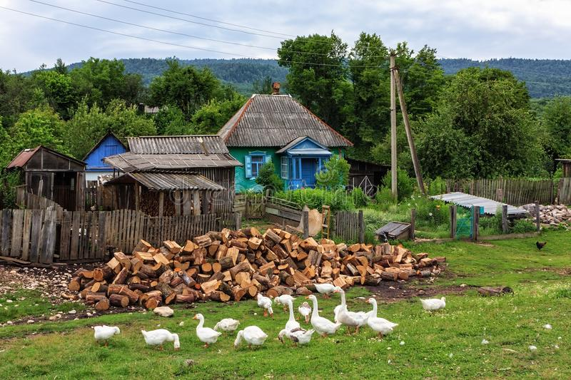 Scenic rustic summer landscape of peasant village. Quiet authentic life at Russian countryside. Scenic rustic summer landscape of a peasant village with geese stock image