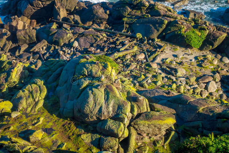Scenic Seal Colony Tauranga Bay in West Coast, New Zealand.  stock photography