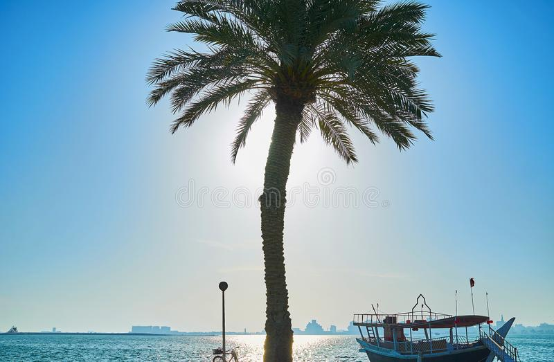 The seascape with palm and dhow, Doha, Qatar. The scenic seascape of Persian Gulf with tall palm tree and mored dhow boat on the sunny morning in Doha, Qatar royalty free stock photography