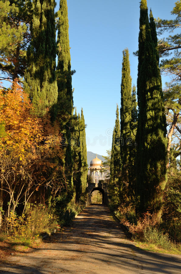 Scenic smooth alley with cypress trees under a bright blue sky royalty free stock images