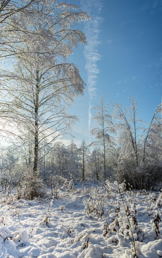Scenic snow covered forest in winter/Snowy fir trees in winter f. Orest at snowfall royalty free stock photography
