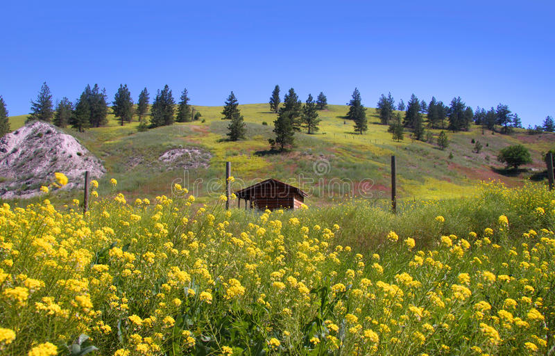 Scenic summer  landscape in Montana