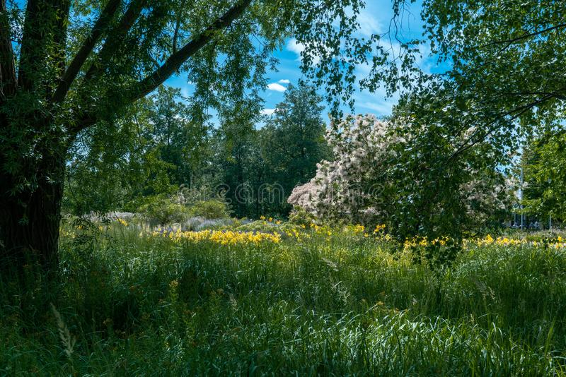 Scenic summer landscape under a tree with blooming yellow flowers royalty free stock photo