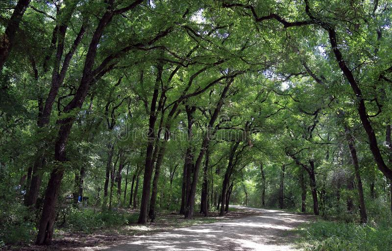 Scenic trail in Mayfield park, Austin. Texas royalty free stock photos