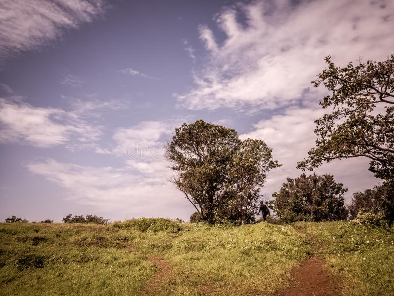 Scenic tree in the backdrop of clear blue sky. Scenic tree backdrop clear blue sky nature landscape royalty free stock photography