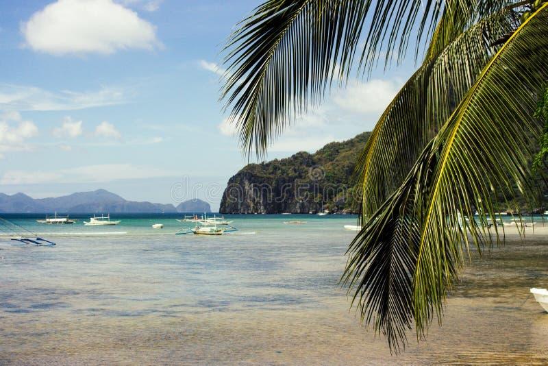 Scenic tropical landscape. Palm tree and boats on seashore. Philippines, island Palawan, El Nido beach. Tropical vacation and tourism. Philippines isles. Blue stock photos