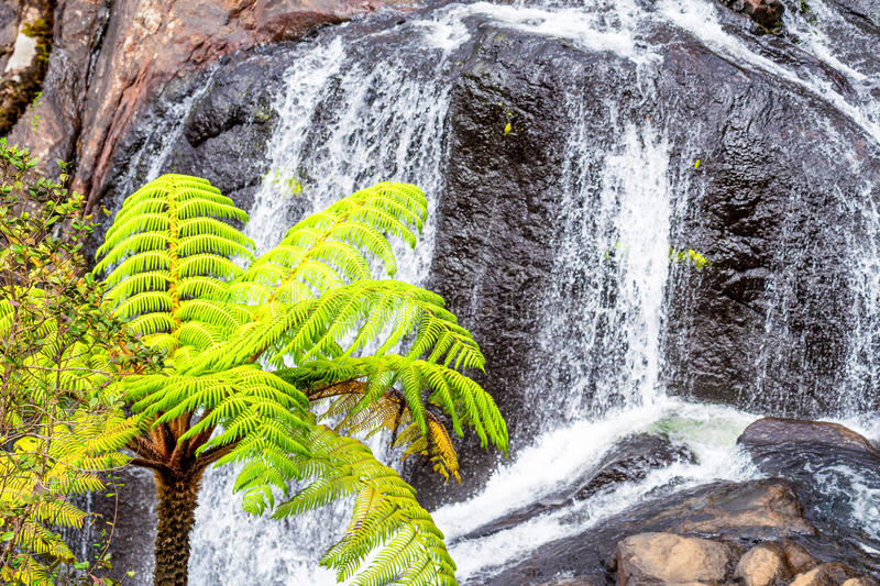 Scenic tropical waterfall. Bakers Falls In Horton Plains, Sri Lanka. The Height Of Bakers Waterfalls Is 20 Metres And The Falls Were Named After Sir Samuel Baker royalty free stock photo