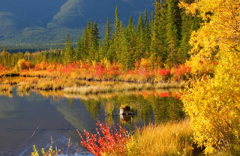 Scenic Vermilion lakes landscape in autumn time stock photography