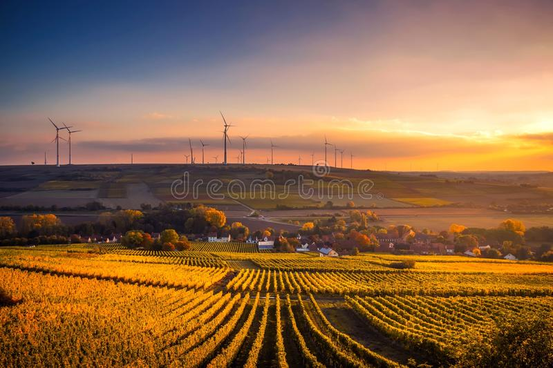 Scenic View of Agricultural Field Against Sky during Sunset stock photo