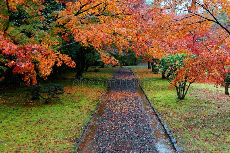 Scenic view of an alley through an autumn forest in beautiful Katsura Imperial Villa  Royal Park stock photos