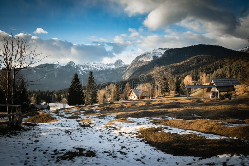 Scenic view in alpine forest mountains with isolated wooden chalet house in idyllic sunny winter environment, pokljuka, slovenia. Scenic view in alpine forest royalty free stock images