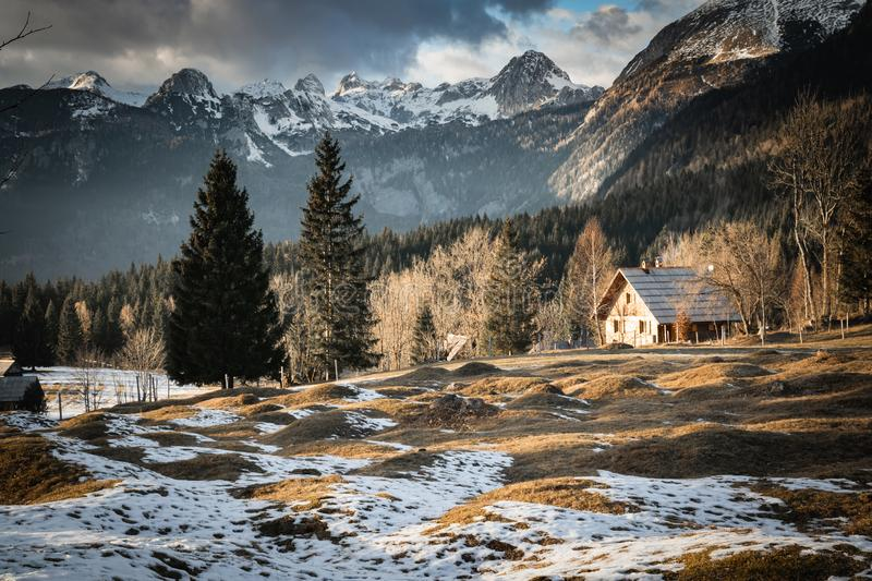 Scenic view in alpine forest mountains with isolated wooden chalet house in idyllic sunny winter environment, pokljuka, slovenia. Scenic view in alpine forest royalty free stock image