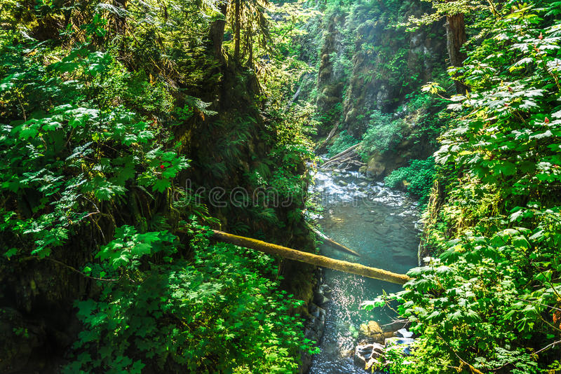 Scenic view of beautiful Sol Duc water fall in Olympic national park on summer time,Washington State.USA.. Scenic view of beautiful Sol Duc water fall in stock photos