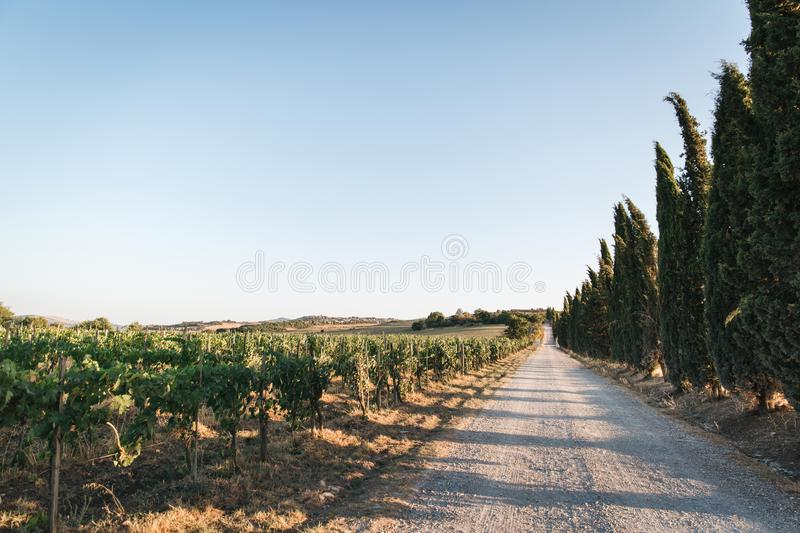 Scenic view of beautiful Tuscany vineyard and empty. Road, Italy royalty free stock photos