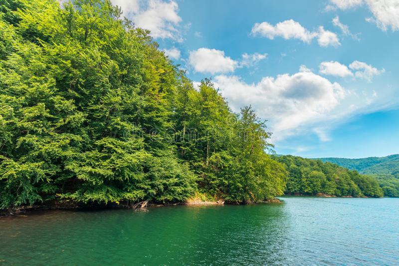 Scenic view of beech forest on lake shore royalty free stock photos