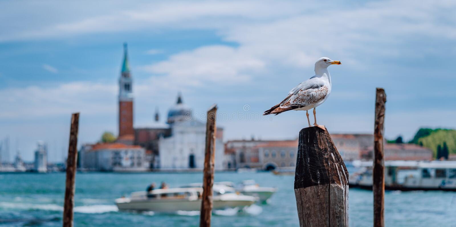 Scenic view of blurred Venice panorama of Venice`s embankment with seagull in front. Most popular touristic attraction. Summer city trip vacation in Italy stock images