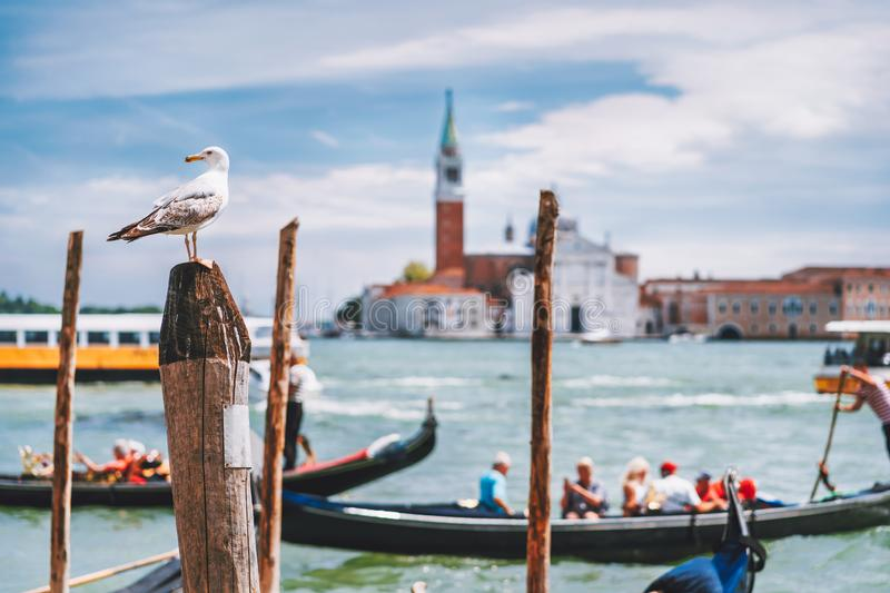 Scenic view of blurred Venice panorama of Venice`s embankment with seagull in front. Most popular touristic attraction. Summer city trip vacation in Italy stock photo