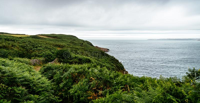 Scenic view of the coast with green ferns against cloudy sky royalty free stock images