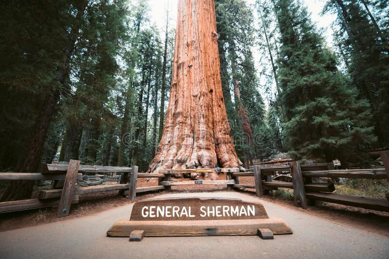 General Sherman Tree, the world`s largest tree by volume, Sequoia National Park, California, USA. Scenic view of famous General Sherman Tree, by volume the world royalty free stock photography