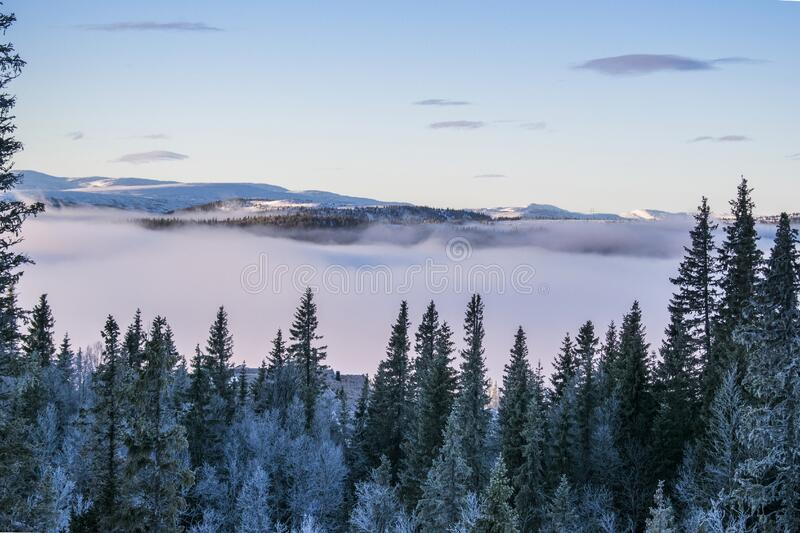 Scenic View of Foggy Forest royalty free stock photography