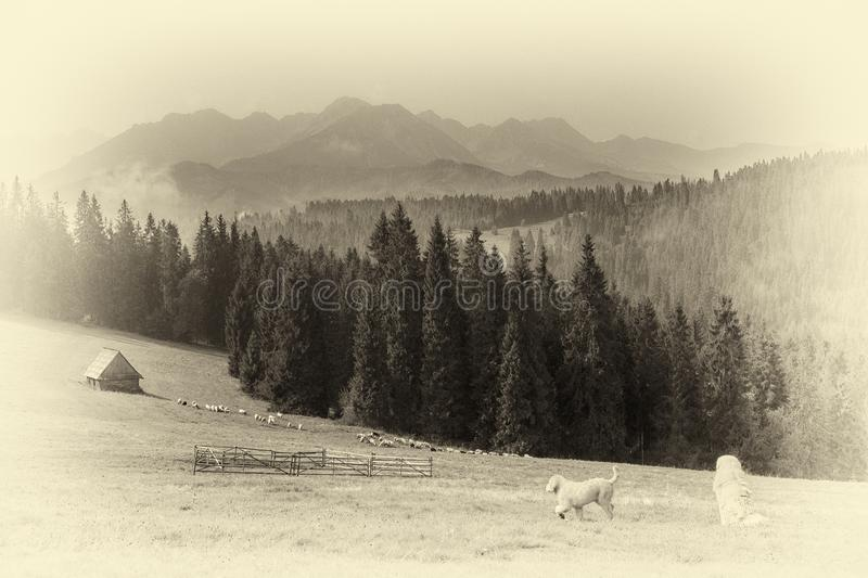 Scenic view of the High Tatras with a sheepdog on the pasture royalty free stock photos