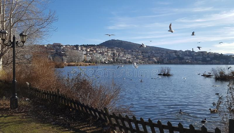 Scenic view of Kastoria town with seagull over the famous Orestiada lake in Greece stock photography