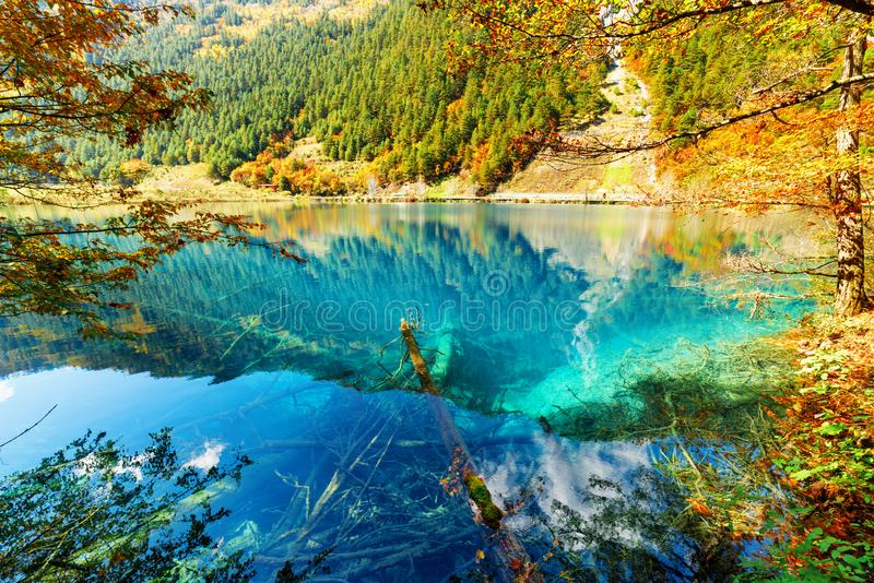 Scenic view of lake with azure water among colorful fall woods. In the Shuzheng Valley, Jiuzhaigou nature reserve (Jiuzhai Valley National Park), China royalty free stock image