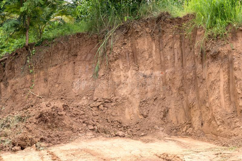 Soil erosion and digging under the tree. stock images