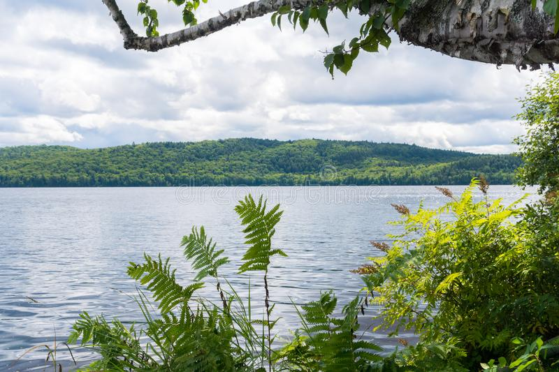 Scenic view over the mountains and the lake through the fern and trees in the foreground, Canada royalty free stock image