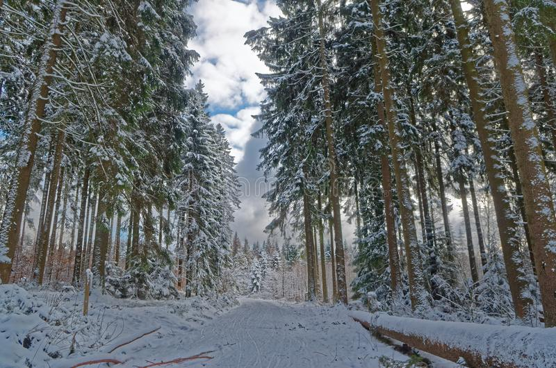 Scenic view of of a picturesque path in a winter forest and cloudy sky. Harz national park, Germany stock photography