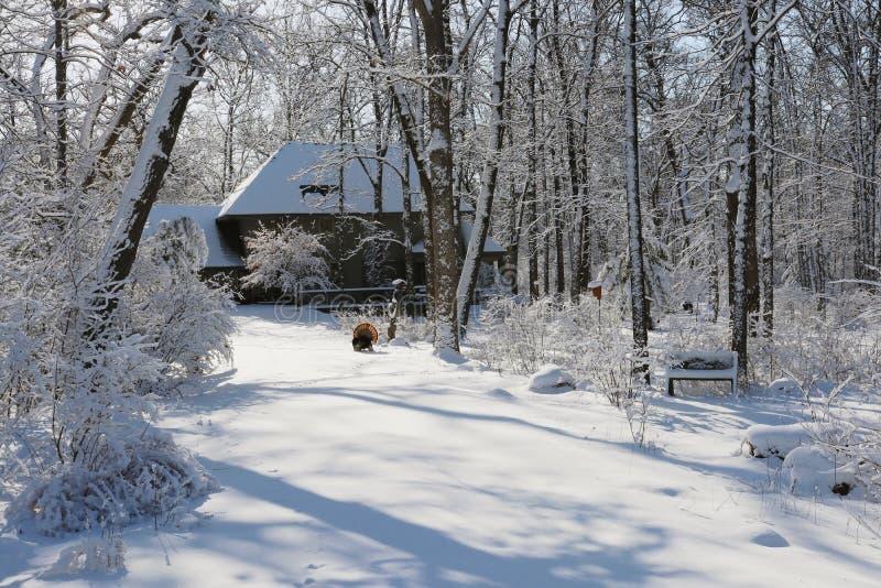 Beautiful winter rural landscape. stock image