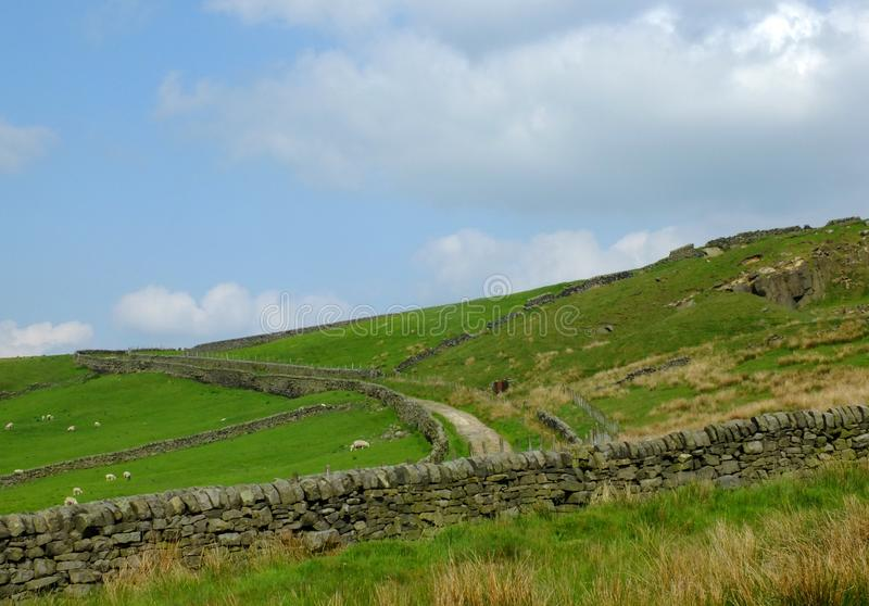 Scenic view of a rough yorkshire moorland and pasture with sheep grazing in fields bordered by dry stone walls. Running up a steep hill with a small road stock image