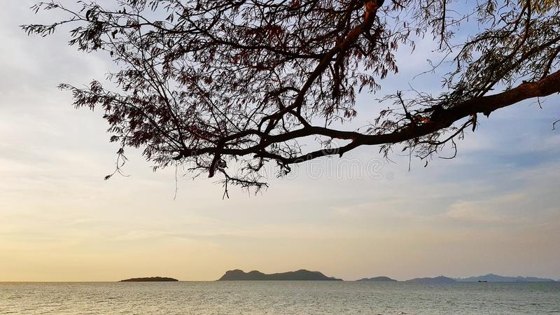 Scenic view of sea against sky. Scenic view sea against sky tree branches leaves lanscape ocean shore coast beautiful seascape tourism travel environment royalty free stock image