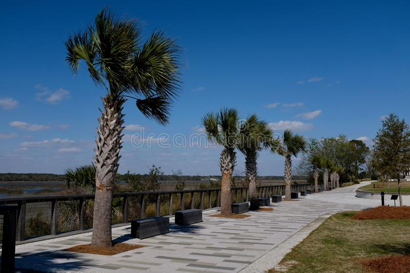 Sidewalk With Palm Trees and Benches royalty free stock photos