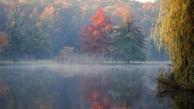 Scenic view of Stromovka city park in Prague, Czech Republic. Colorful leaves on trees and birds swimming in a pond covered by fog. On a calm and early morning stock photos
